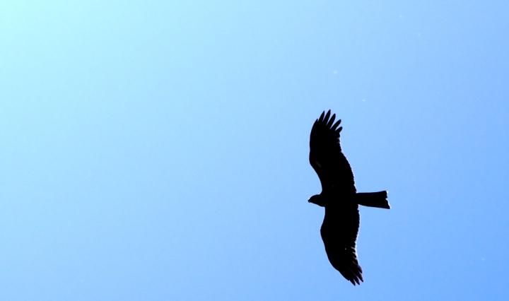 oiseau en contre jour